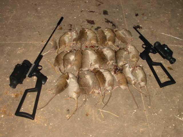 rat hunting with an m 1 carbine. Black Bedroom Furniture Sets. Home Design Ideas