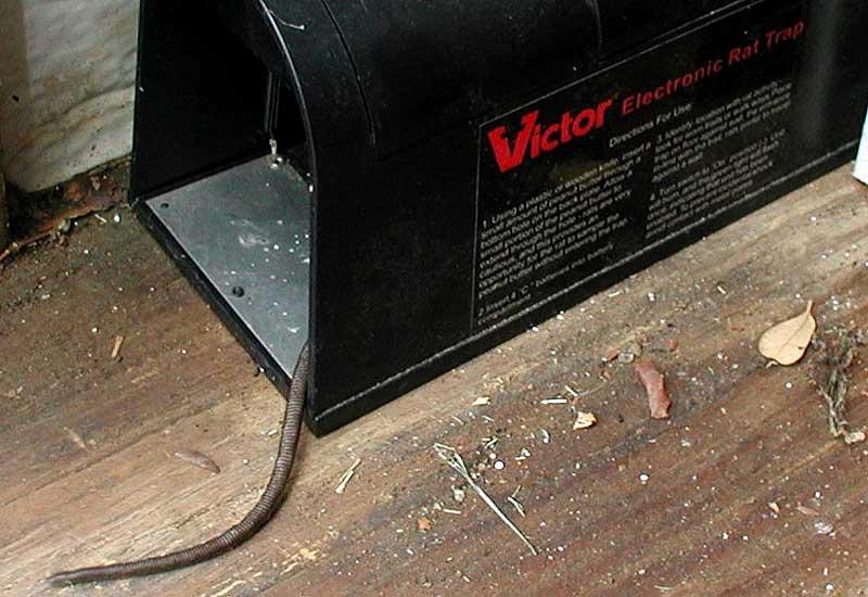 Best Electric Rat Trap Rat Trap
